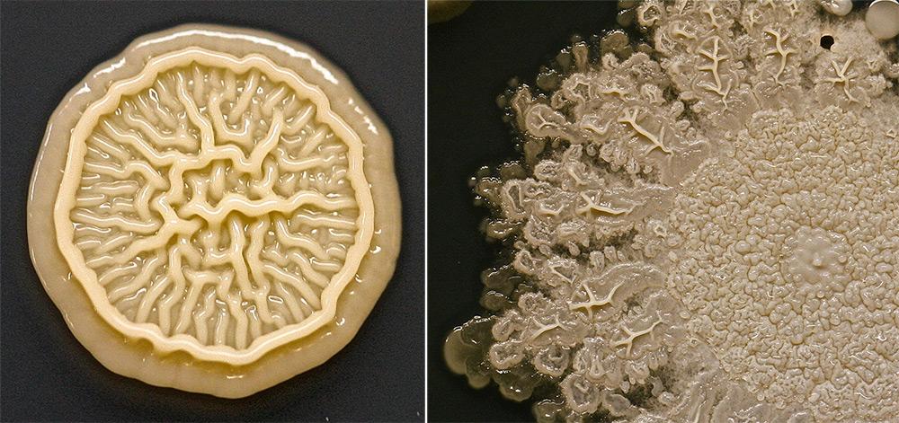 As bactérias da impressão da mão de uma criança