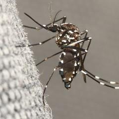 Zika é detectado em duas grávidas